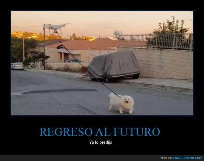dron,paseando,perro