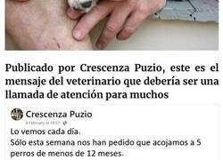 Enlace a Este veterinario se vio obligado a sacrificar a un cachorro sano y pide a la gente que se lo piense bien antes de adquirir un perro durante el confinamiento
