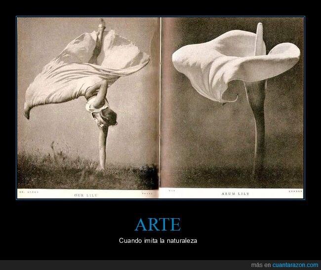 flor,fotografía,parecidos