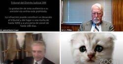"""Enlace a """"Creo que tiene un filtro activado"""": Un abogado se presenta accidentalmente con un filtro de gato en una audiencia judicial vía Zoom"""