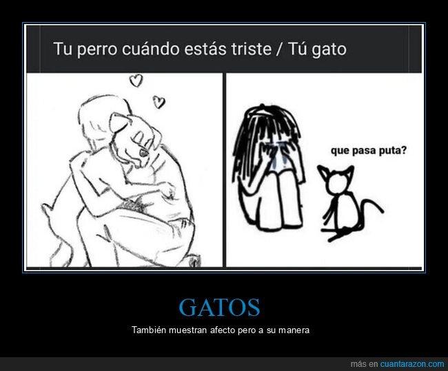gatos,perros,triste