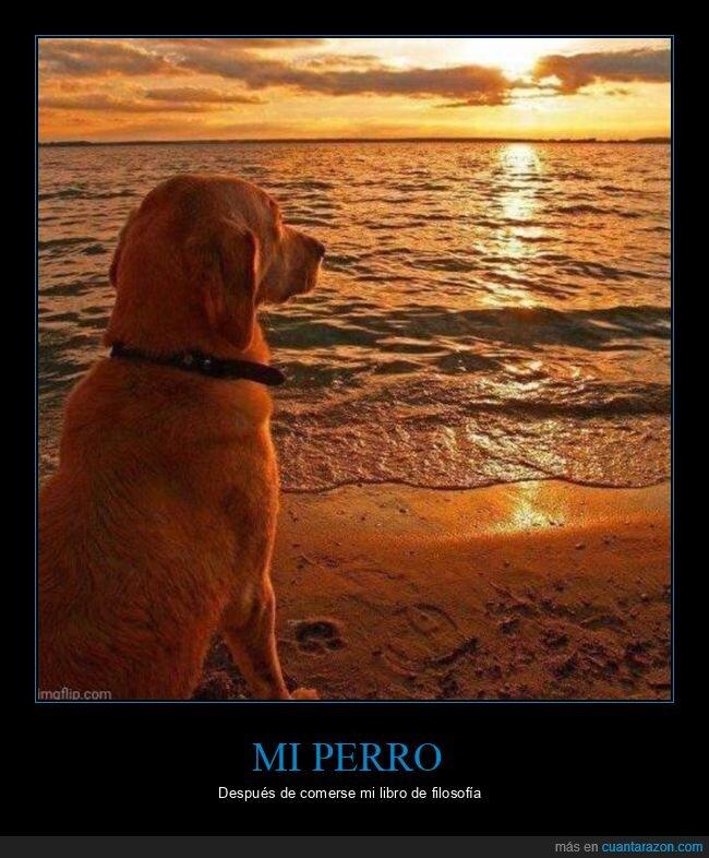 filosofía,libro,perro