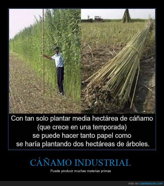 árboles,cáñamo,papel,plantar