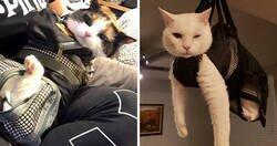 Enlace a De las mejores y más divertidas reseñas de las bolsas para asear gatos en Amazon
