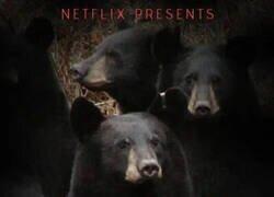 Enlace a Osos polares en Netflix