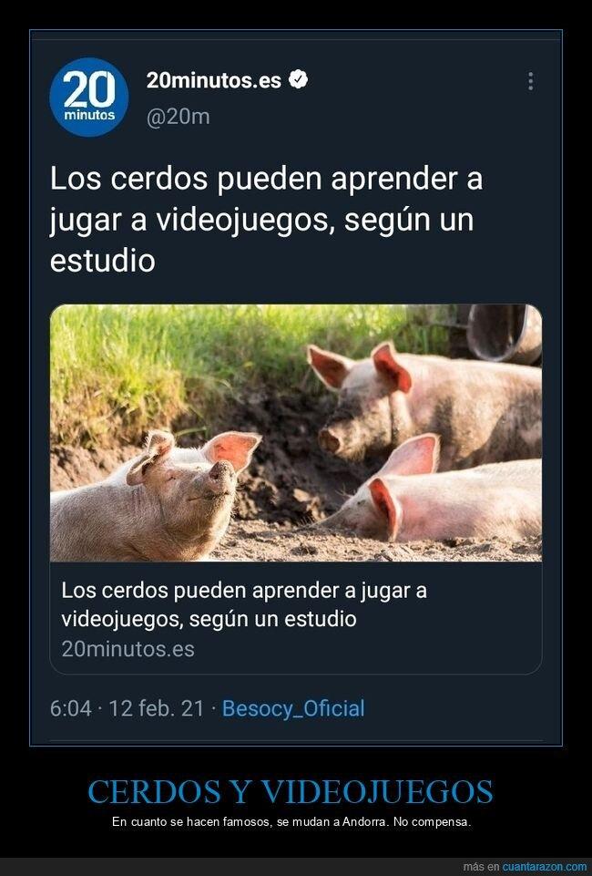 andorra,cerdos,videojuegos
