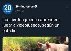 Enlace a Cerdos gamers