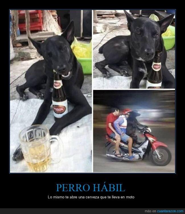 abrir,botella,cerveza,moto,perros,wtf