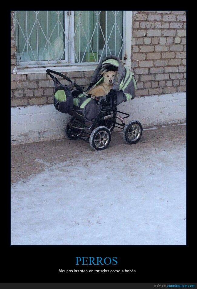 carrito,perro,wtf