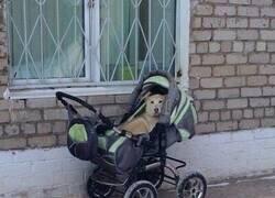 Enlace a Bebé de cuatro patas