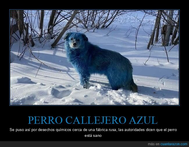 azul,perro,wtf