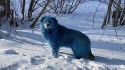 Enlace a Más raro que un perro azul