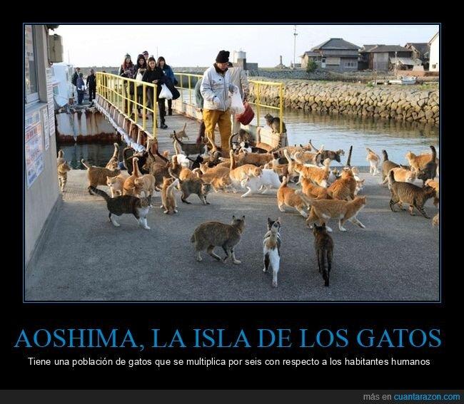 aoshima,gatos,isla