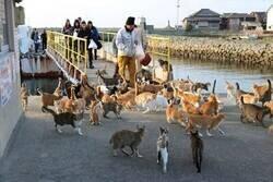 Enlace a Superpoblación felina