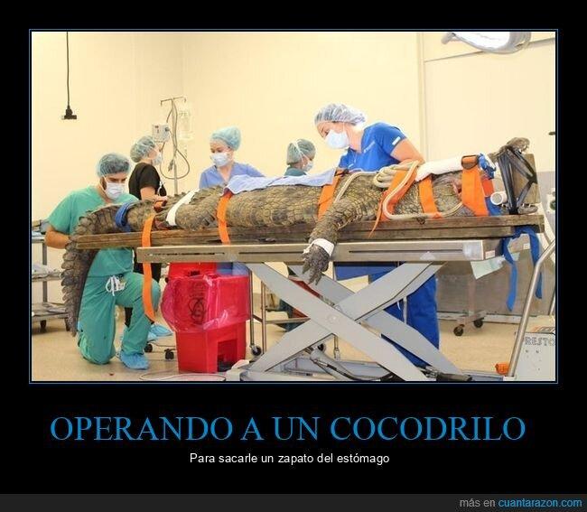 cocodrilo,operando,zapato
