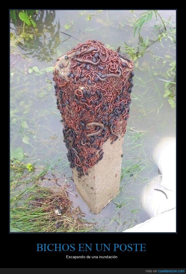 bichos,inundación,poste
