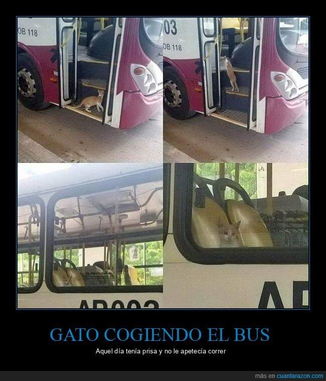 autobús,gato,wtf