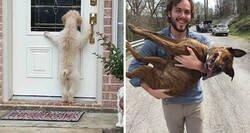 Enlace a Fotos de perros desaparecidos que regresaron a sus hogares