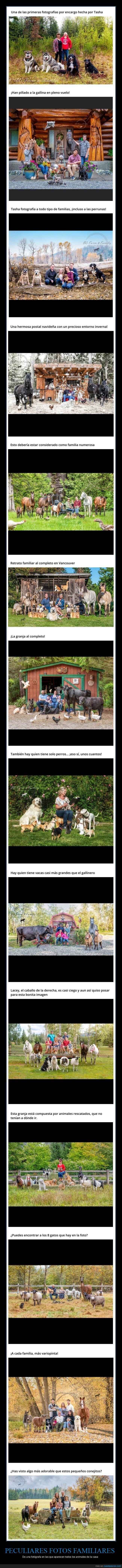 animales,fotos familiares