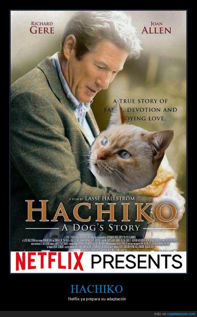 gatos,hachiko