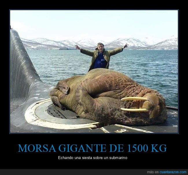 gigante,morsa,submarino