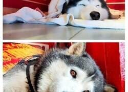 """Enlace a Este perro guardián llamado Lucky ignoró a un """"ladrón"""" durante un ejercicio de entrenamiento en una joyería"""