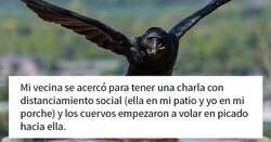 """Enlace a Esta mujer comparte cómo creó un """"ejército de cuervos"""" alimentándolos, y posiblemente salvaron la vida de un vecino"""