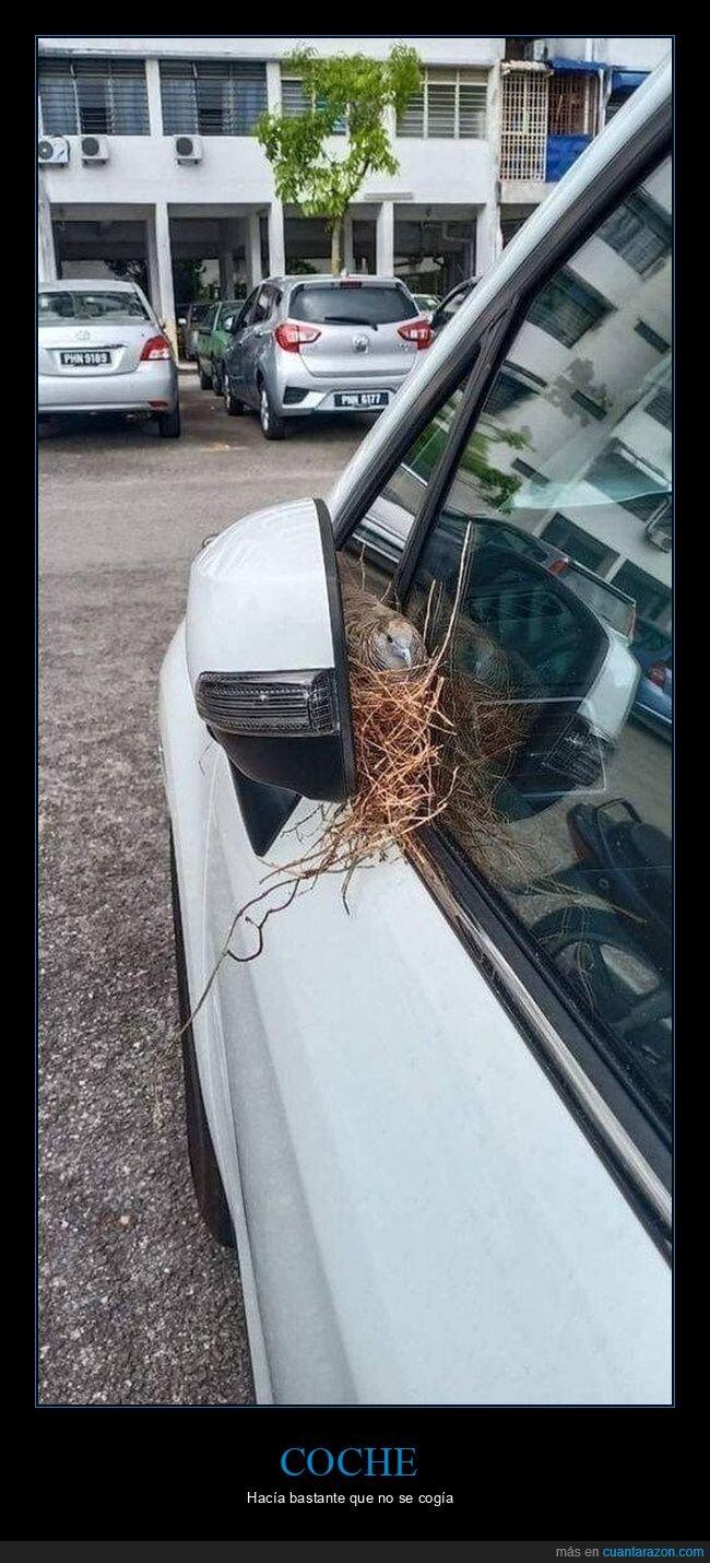 coche,nido,pájaro,retrovisor