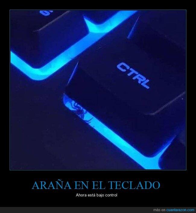 araña,control,tecla,teclado