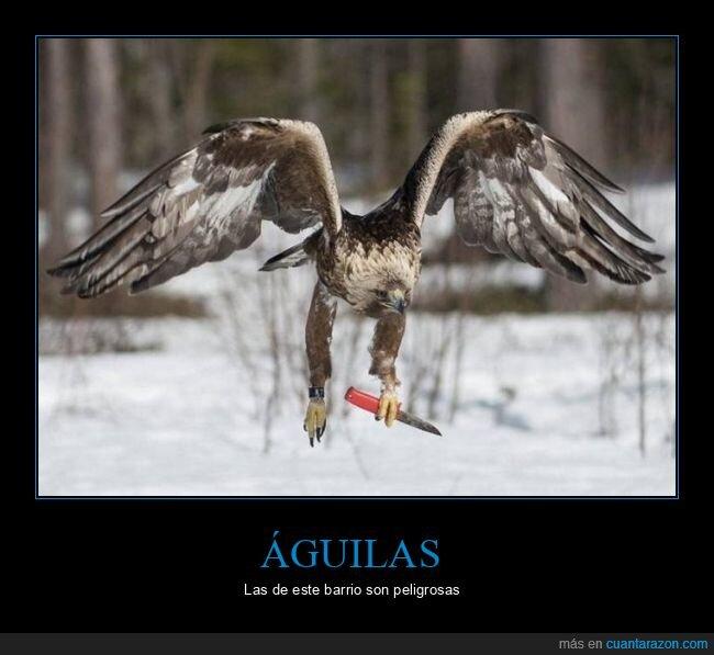 águila,navaja,wtf