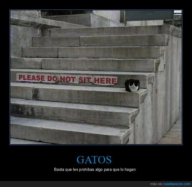 escaleras,gato,sentarse