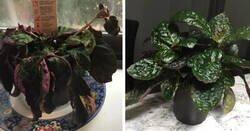 Enlace a Antes y después de personas que tienen una habilidad especial para la jardinería