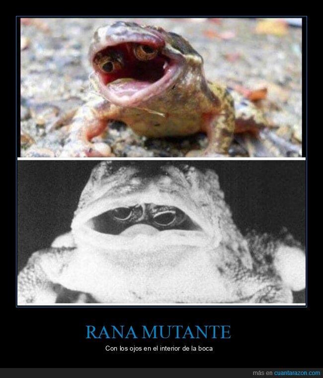 boca,ojos,rana