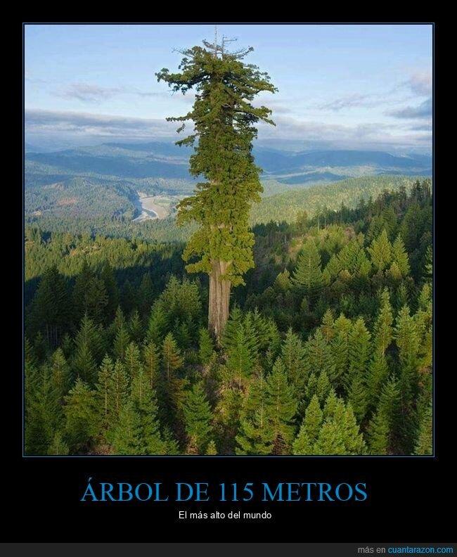 alto,árbol
