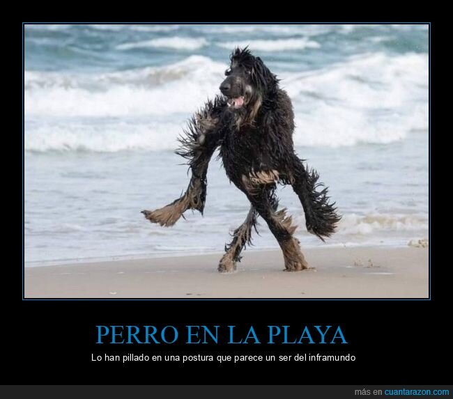 perro,playa,wtf