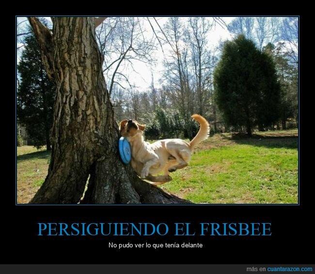 árbol,frisbee,perro