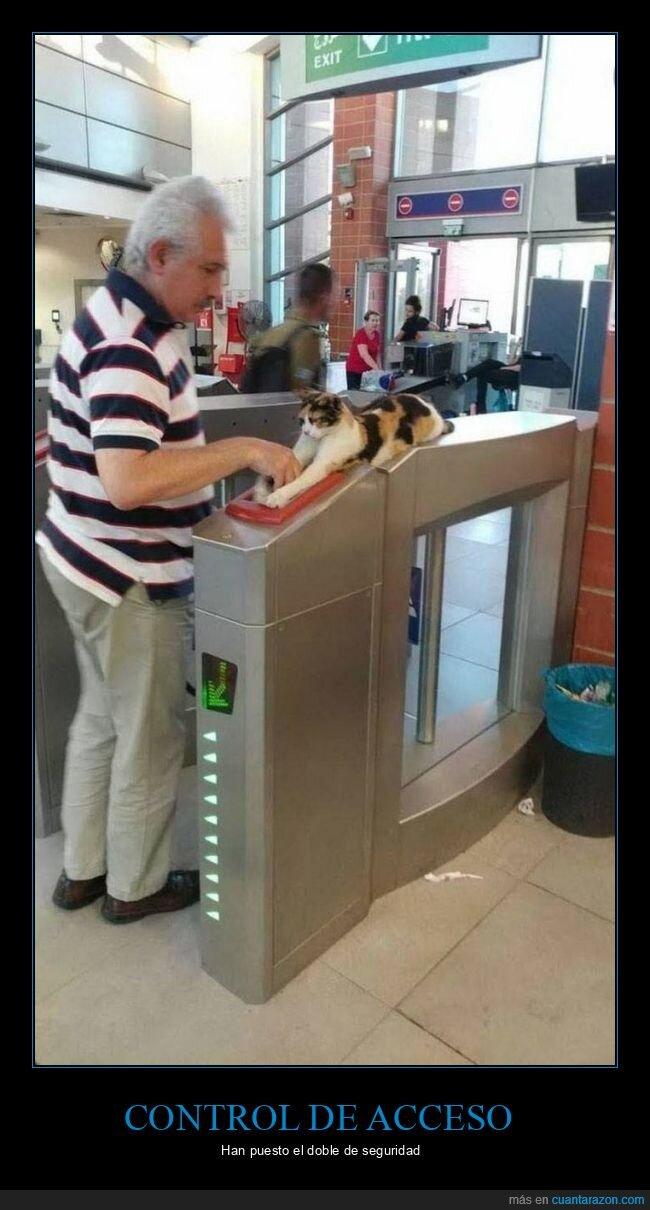 acceso,control,gato,wtf