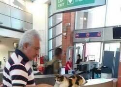 Enlace a Seguridad felina