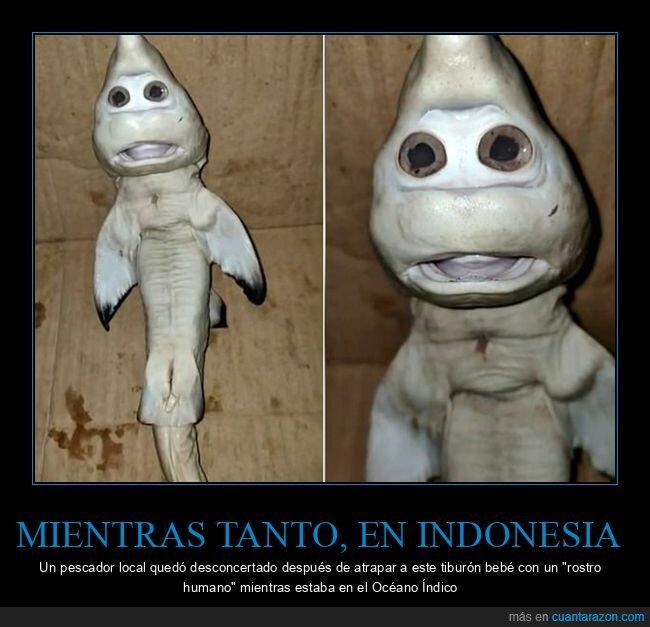 indonesia,pescador,tiburón,wtf