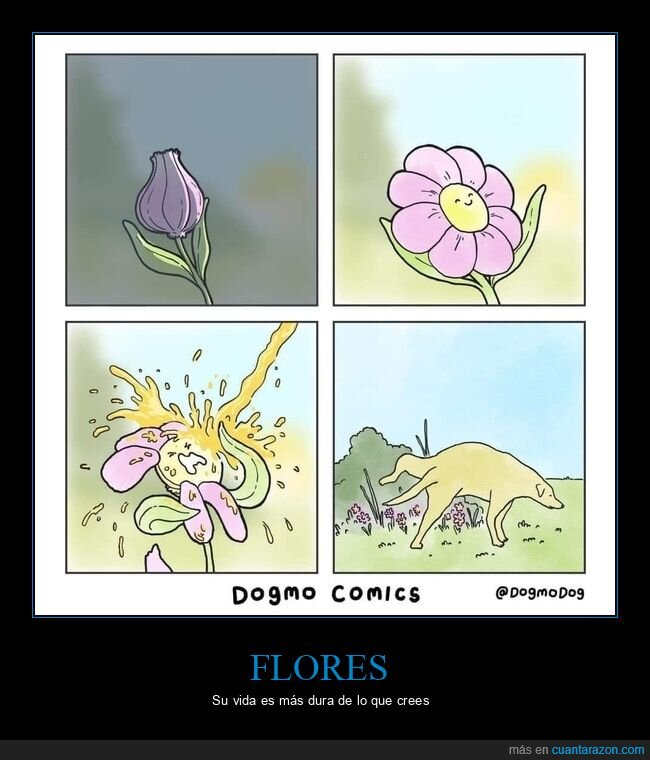 flor,meando,perros