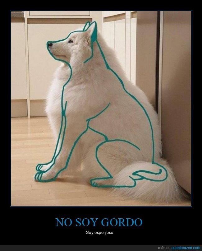 esponjoso,perro