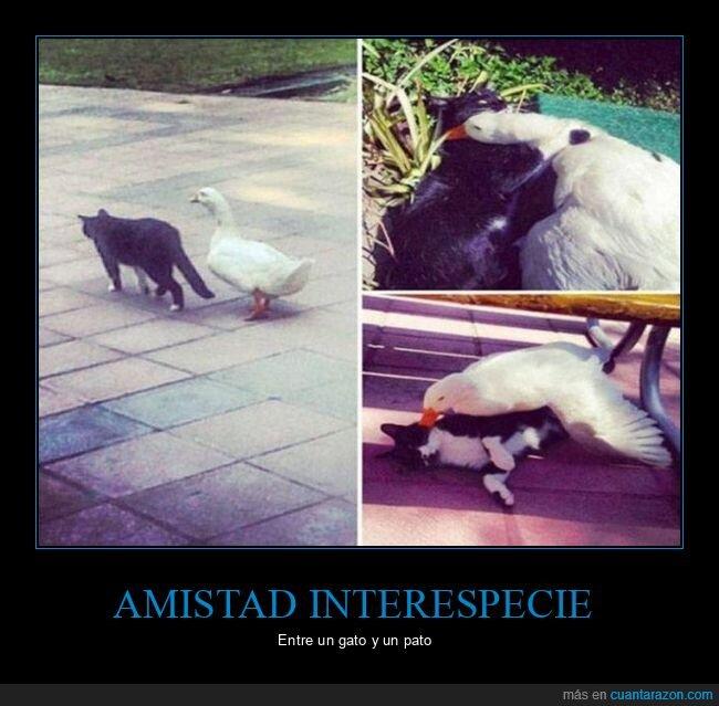 amistad,gato,pato,wtf