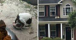 """Enlace a """"¿Qué le pasa a tu perro?"""": La gente está publicando fotos de perros que """"funcionan mal"""""""
