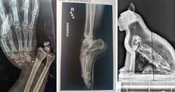 Enlace a Imágenes en rayos X que te revelarán lo sorprendente que es el interior de las cosas