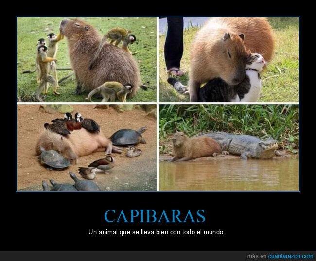 animales,capibaras,llevarse bien