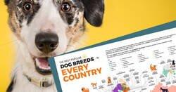 Enlace a Este mapa muestra cuáles son los perros más populares en cada país del mundo