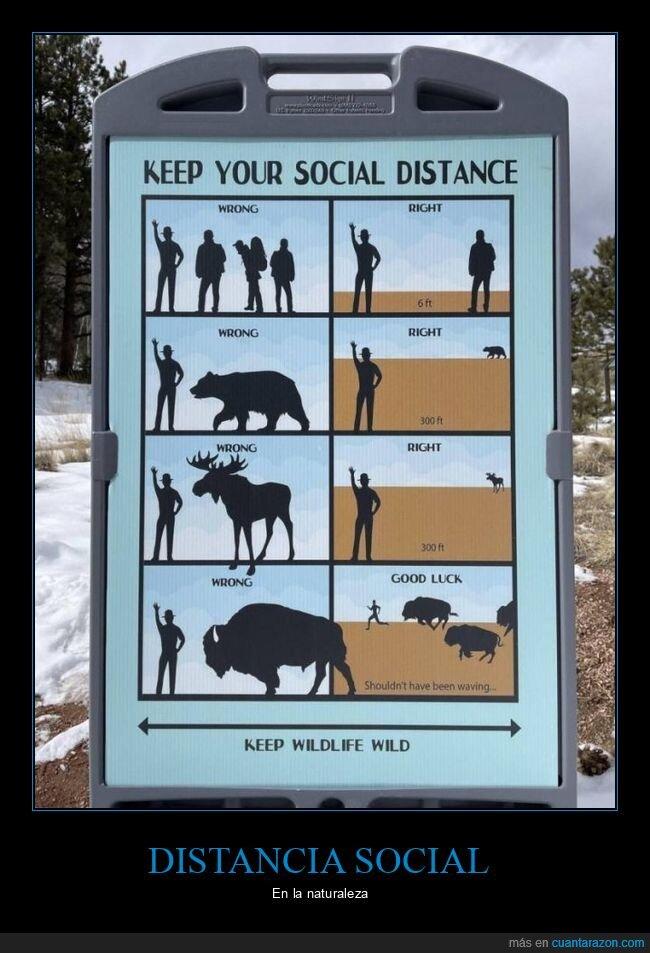 animales,distancia social