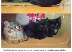 Enlace a Cómo adoptó a una gatita callejera y cómo le «engañó» para adoptar a sus hijos poco a poco
