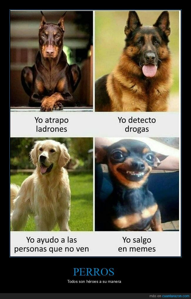 memes,perros