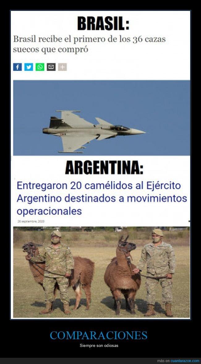 argentina,aviones,brasil,camélidos,llamas
